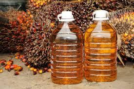 Europoslanci vytáhli proti palmovému oleji. Do roku 2020 má zmizet z biopaliv